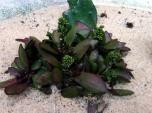Succulents5