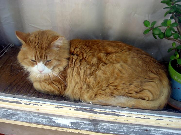 Puss in Window