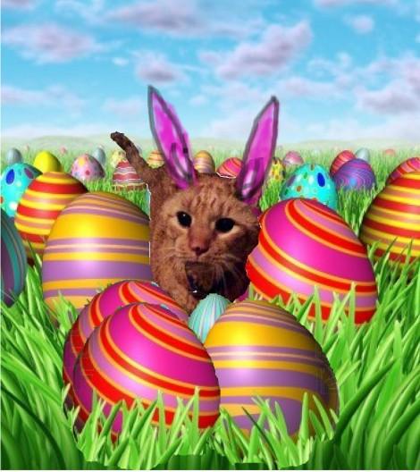 Plumpton Easter Cat